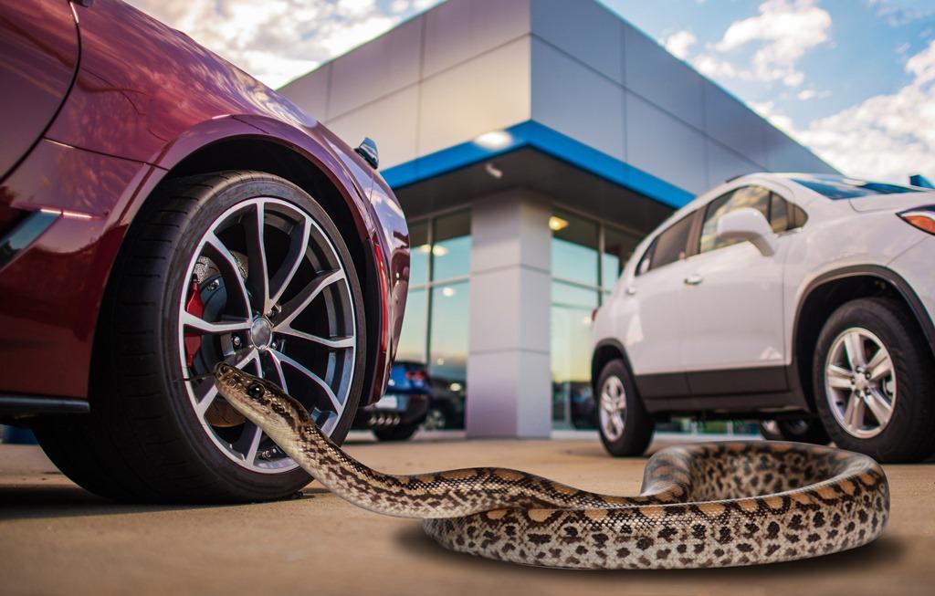 Wąż na jeździe próbnej